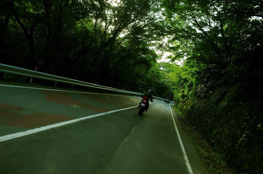 [伊豆の新緑  DSC_0648.jpg]