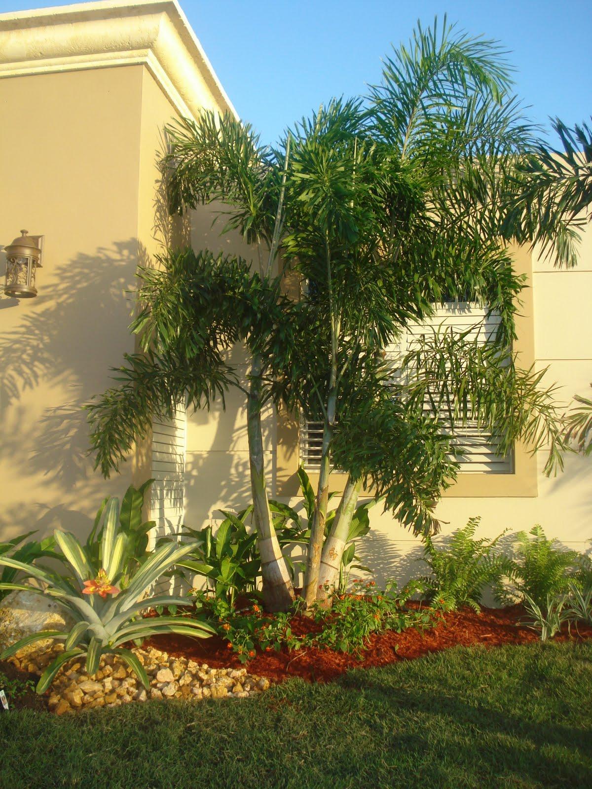 jardines de exterior en puerto rico higuaca jardineria