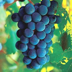 O poder do extrato da uva