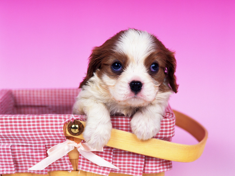 Cute animal wallpapers 2010 cute dogs
