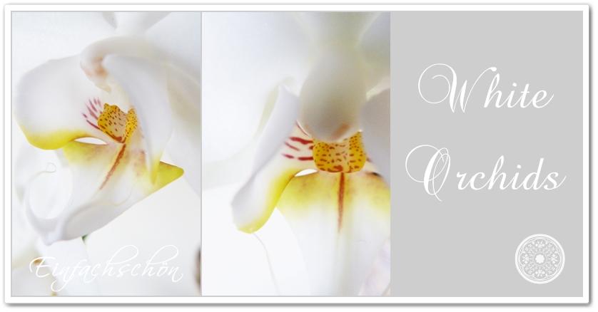 einfachsch n orchideen. Black Bedroom Furniture Sets. Home Design Ideas