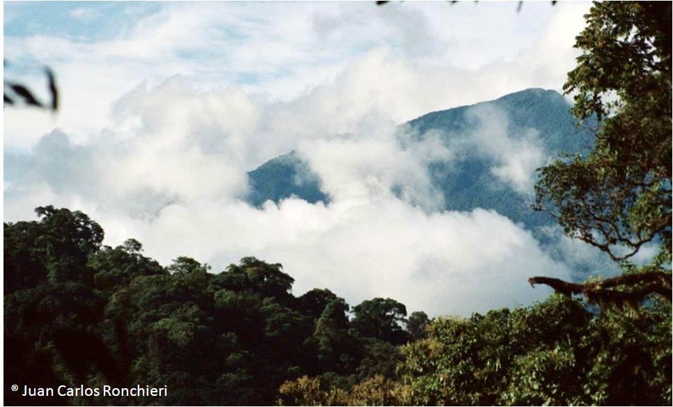 La Selva Tucumano-Oranense, el hábitat más austral del oso de anteojos ó andino (Tremarctos ornatus Cuvier, 1825)