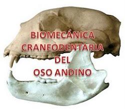 Biomecánica craneodentaria del oso andino