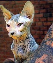 Tat cat