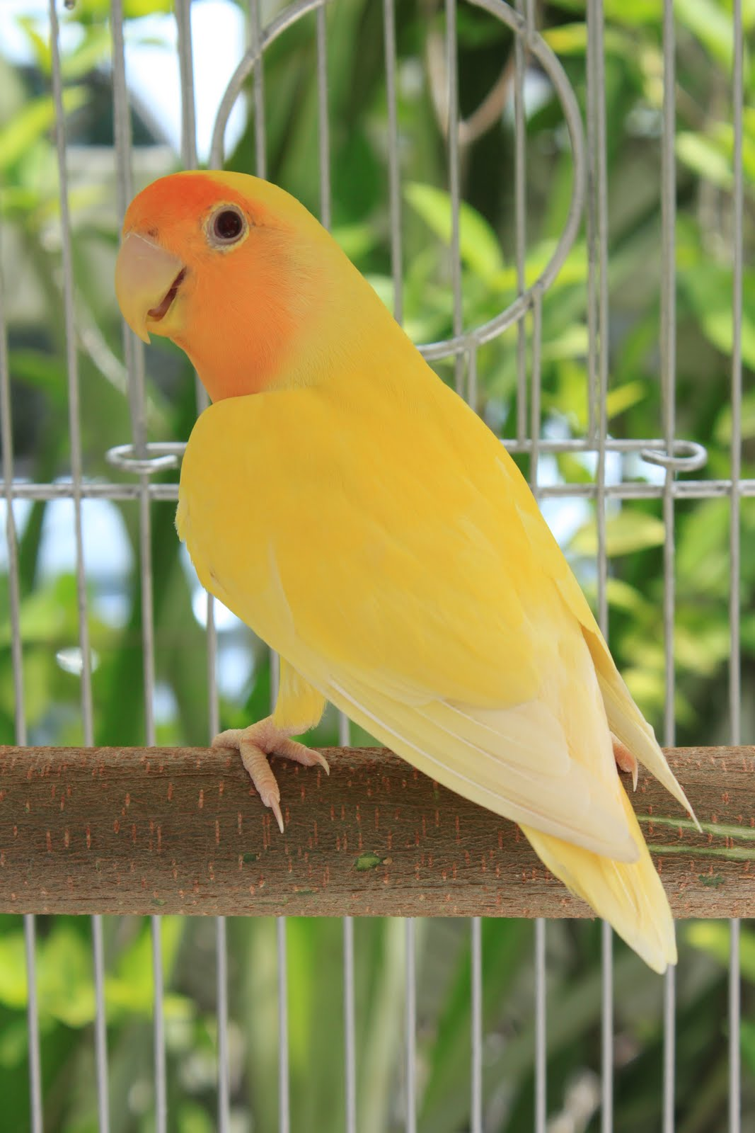 Watta Bird!: OrangeFac...