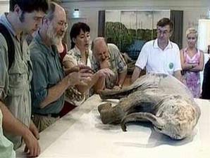 Komodo Binatang Purba Yang Masih Hidup