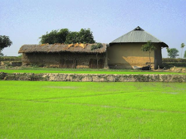[village+near+Rajshahi.jpg]