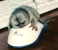 A very small primate