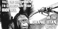 Biofuels: killing orang-utans in Indonesia