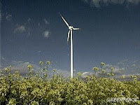 Wind potential in Ontario - courtesy of Greenpeace, WWF