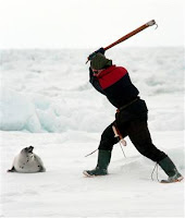 Stop the seal hunt!