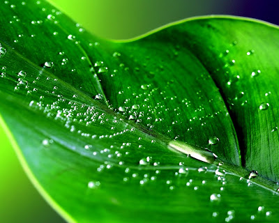 Natural leaf Wallpaper