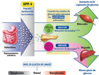Biokimik medic 2: ReGuLaCiOn De La GlUcEMia