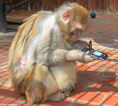 most-intelligent-animals-in-the-world-rhesus-monkey.jpg