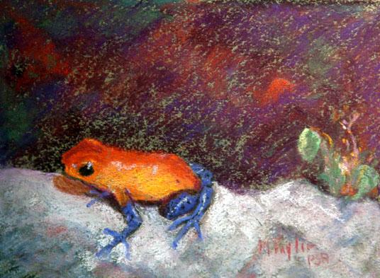 Sue's frog. 1