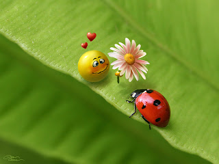 Love Smiley, Ladybird wallpaper