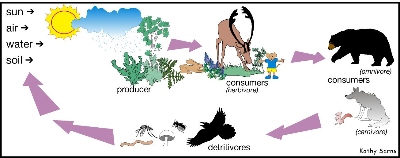 Summary 3 food chain and food web