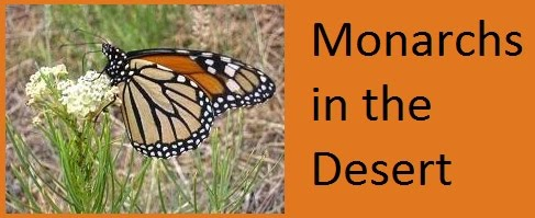 Monarchs in the Desert