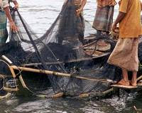 Traditional net fishing