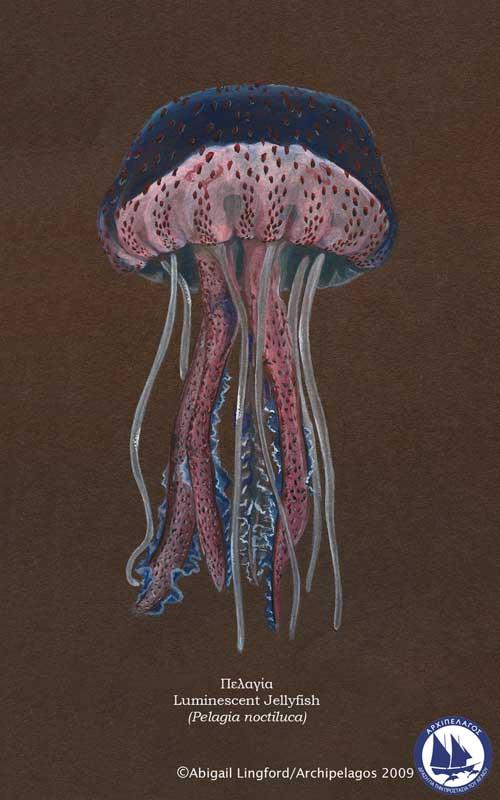 [luminescent-jellyfish.jpg]