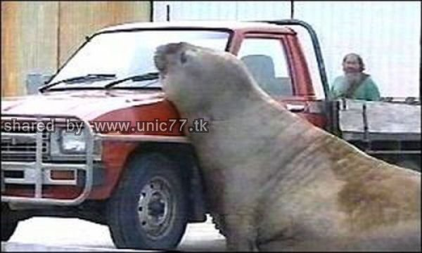 cars_and_animals_640_07.jpg (600×360)