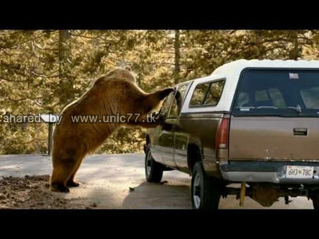 cars_and_animals_640_02.jpg (640×480)