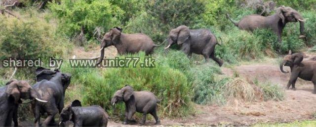 elephants_to_the_640_06.jpg (640×259)