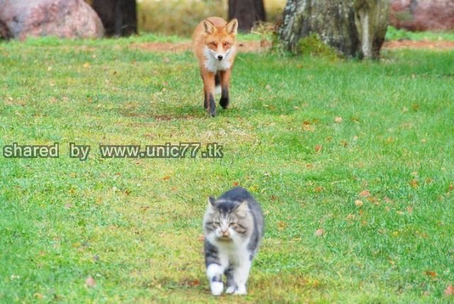 hunting_fail_640_01.jpg (640×429)