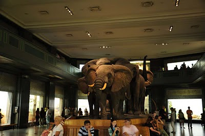 New York - American Museum of Natural History