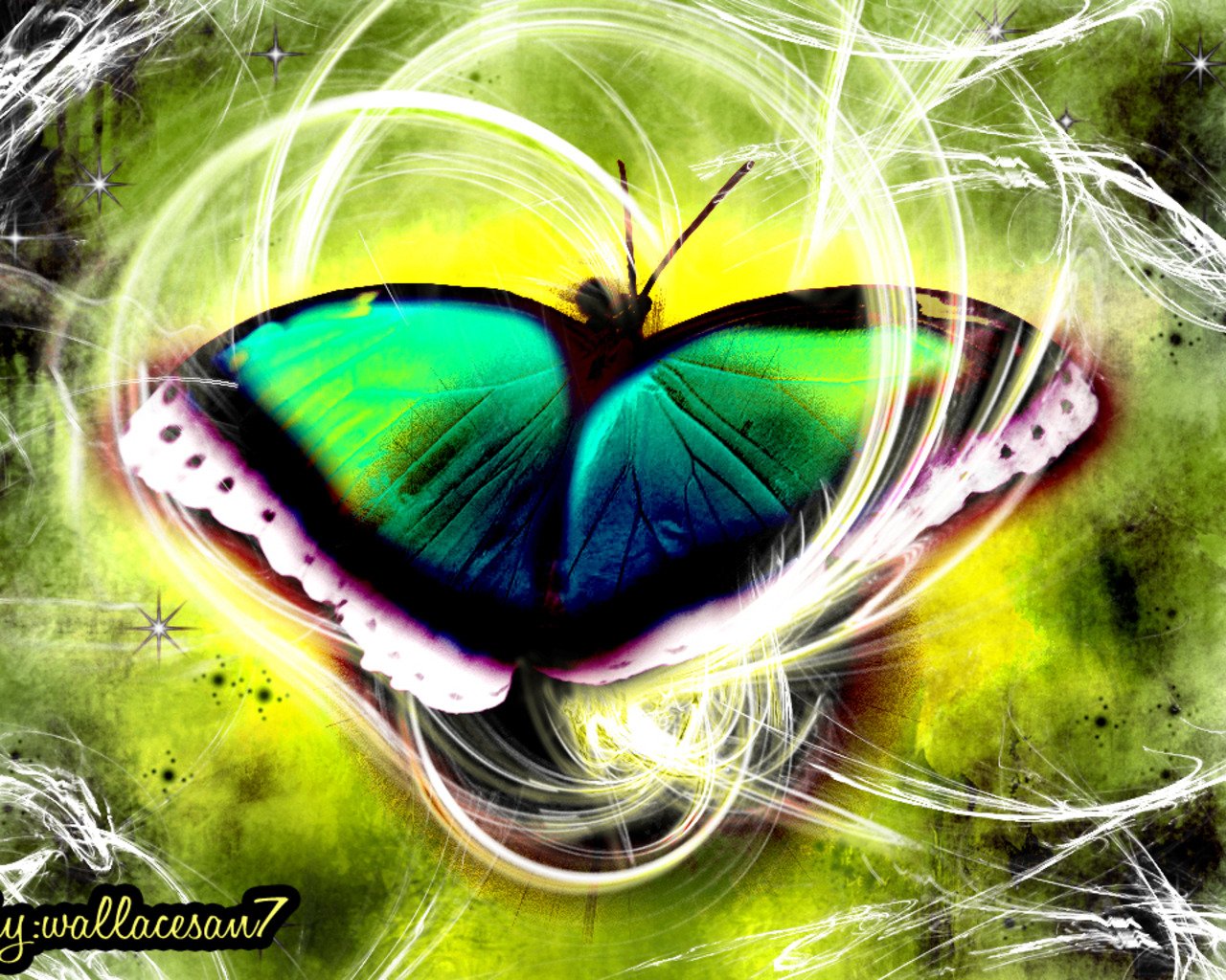 Best Beauiful Butterfly Wallpapers