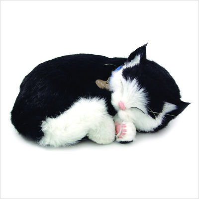 Perfect Petzzz Black and White Domestic Short hair Kitten