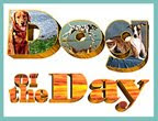 Visit Pet Talk&#39;s DOTD