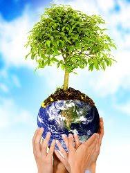Saiba mais sobre o meio ambiente