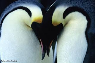 história de pinguins
