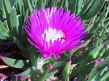 As plantas mais comuns no Alentejo durante os nossos passeios