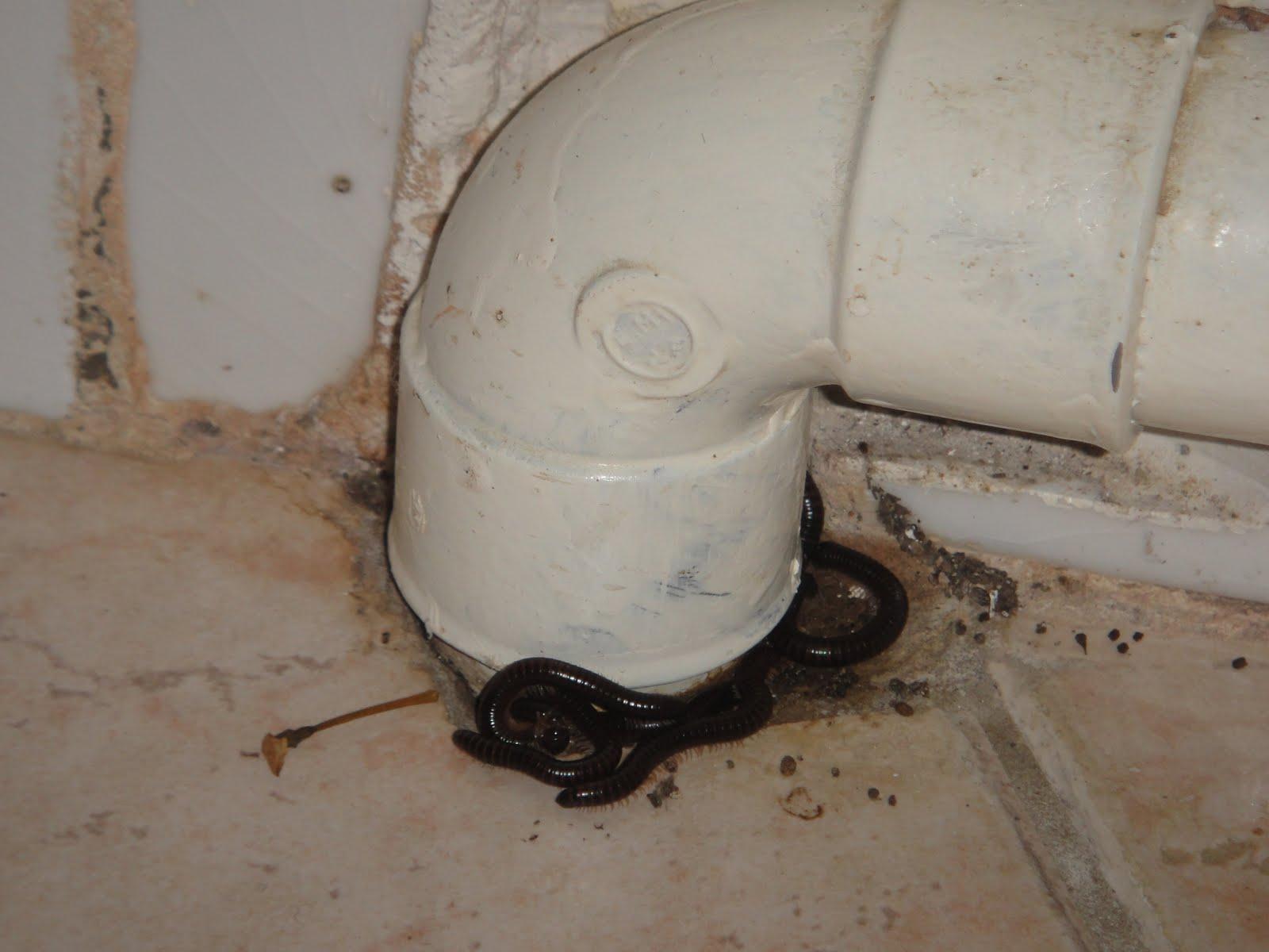 Insecte Salle De Bain Poisson D'Argent ~ bete d humidit de droles de petites betes sur mon chantier