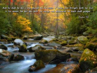 thanksgiving water stream leaf card