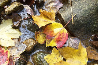 thanksgiving leaves on water stream