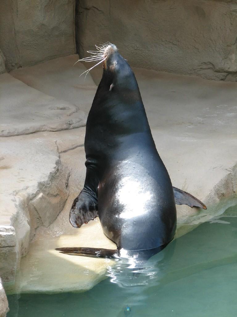 [seal.aspx]