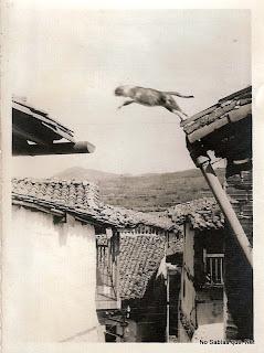 Un gato saltando de un tejado a otro en Candelario Salamanca