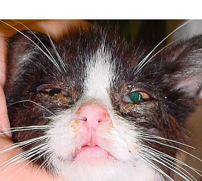 العناية بالقطط  Cat%20URI