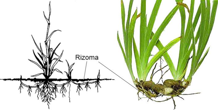 Reproduccion asexual vegetativa estaca