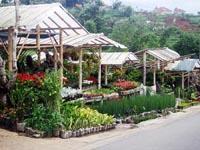 Desa Bunga Cihideung