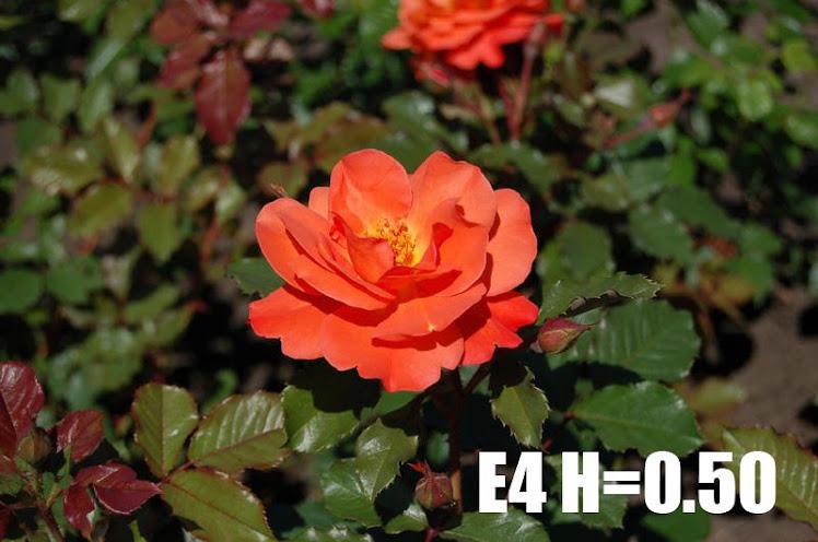 E4 H=0