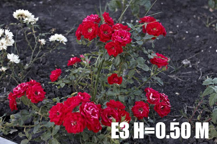 E3 H=0