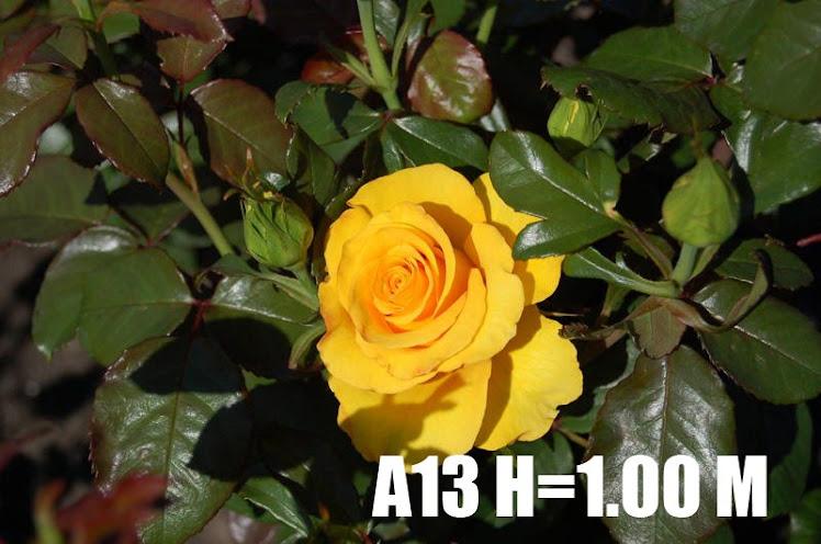 A13 H=1