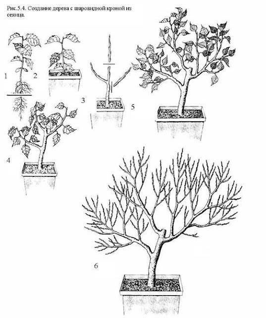 Как сделать крону дерева