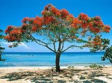 Árvore sobre o Mar