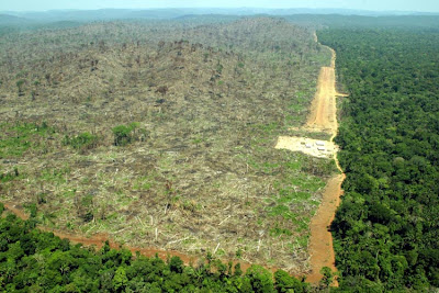 Deforestation in Para, Brazil