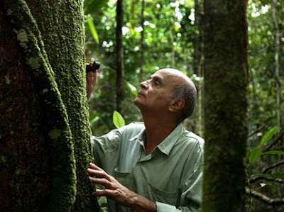 Drauzio Varella looks at a trunk covered with moss